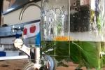 Wasser mit Gartenfrüchten und Blumen